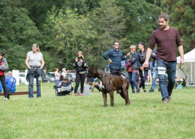 SwissBoxer-DogShow-2019-©BoxerClubGVA-(203)