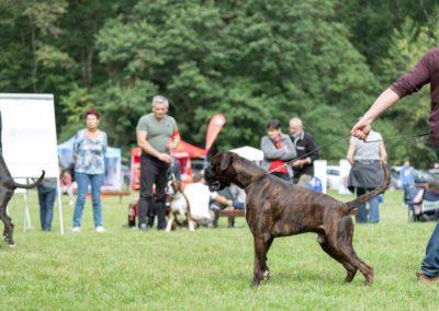 SwissBoxer-DogShow-2019-©BoxerClubGVA-(207)