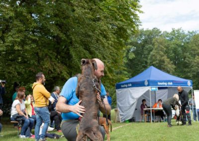 SwissBoxer-DogShow-2019-©BoxerClubGVA-(208)