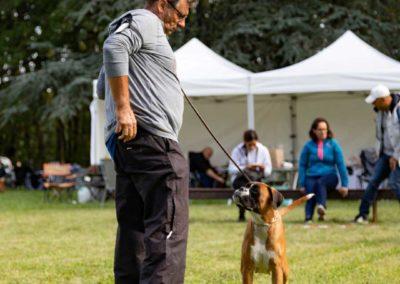 SwissBoxer-DogShow-2019-©BoxerClubGVA-(212)