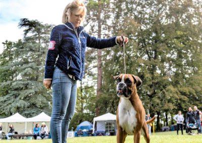 SwissBoxer-DogShow-2019-©BoxerClubGVA-(214)
