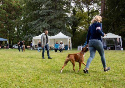 SwissBoxer-DogShow-2019-©BoxerClubGVA-(216)