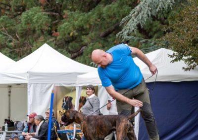 SwissBoxer-DogShow-2019-©BoxerClubGVA-(218)