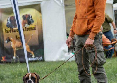 SwissBoxer-DogShow-2019-©BoxerClubGVA-(22)