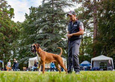 SwissBoxer-DogShow-2019-©BoxerClubGVA-(220)