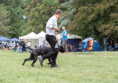 SwissBoxer-DogShow-2019-©BoxerClubGVA-(222)
