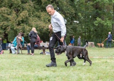 SwissBoxer-DogShow-2019-©BoxerClubGVA-(223)