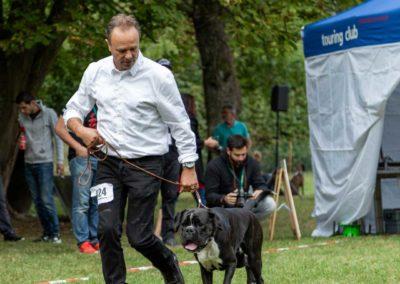 SwissBoxer-DogShow-2019-©BoxerClubGVA-(224)