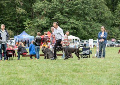 SwissBoxer-DogShow-2019-©BoxerClubGVA-(225)