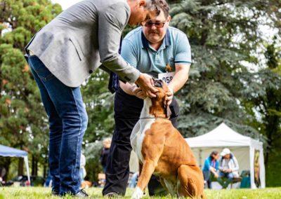 SwissBoxer-DogShow-2019-©BoxerClubGVA-(231)