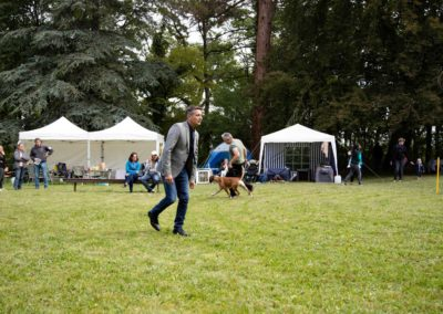 SwissBoxer-DogShow-2019-©BoxerClubGVA-(233)