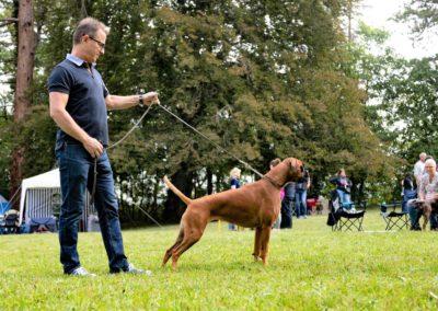 SwissBoxer-DogShow-2019-©BoxerClubGVA-(234)