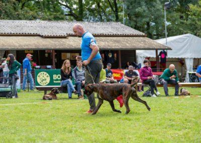 SwissBoxer-DogShow-2019-©BoxerClubGVA-(235)