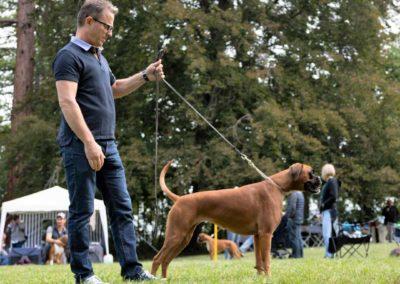 SwissBoxer-DogShow-2019-©BoxerClubGVA-(237)