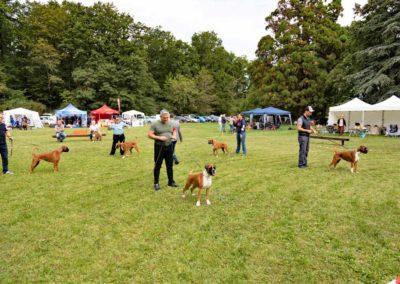 SwissBoxer-DogShow-2019-©BoxerClubGVA-(240)
