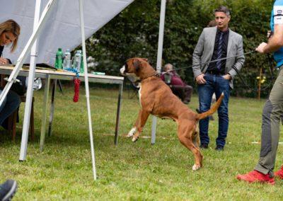 SwissBoxer-DogShow-2019-©BoxerClubGVA-(242)
