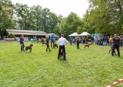 SwissBoxer-DogShow-2019-©BoxerClubGVA-(244)