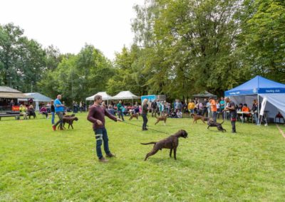 SwissBoxer-DogShow-2019-©BoxerClubGVA-(245)