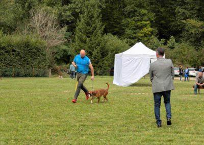 SwissBoxer-DogShow-2019-©BoxerClubGVA-(246)