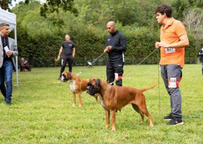SwissBoxer-DogShow-2019-©BoxerClubGVA-(247)