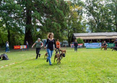 SwissBoxer-DogShow-2019-©BoxerClubGVA-(248)