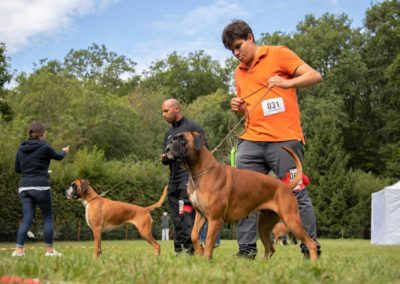 SwissBoxer-DogShow-2019-©BoxerClubGVA-(249)
