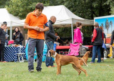 SwissBoxer-DogShow-2019-©BoxerClubGVA-(25)