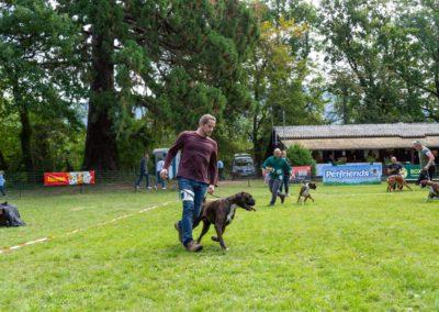 SwissBoxer-DogShow-2019-©BoxerClubGVA-(251)
