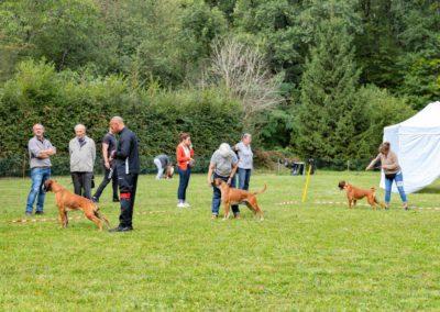 SwissBoxer-DogShow-2019-©BoxerClubGVA-(253)