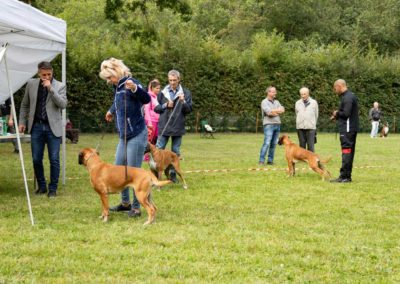 SwissBoxer-DogShow-2019-©BoxerClubGVA-(254)