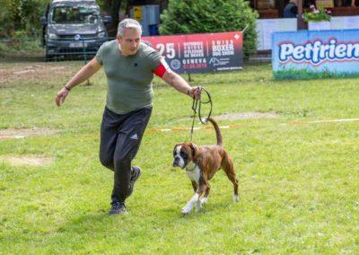 SwissBoxer-DogShow-2019-©BoxerClubGVA-(256)