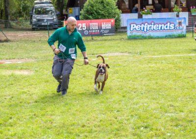 SwissBoxer-DogShow-2019-©BoxerClubGVA-(257)