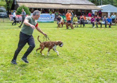 SwissBoxer-DogShow-2019-©BoxerClubGVA-(259)