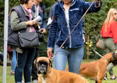 SwissBoxer-DogShow-2019-©BoxerClubGVA-(260)