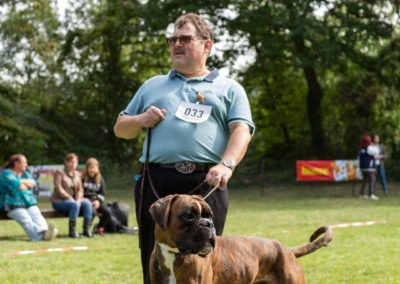 SwissBoxer-DogShow-2019-©BoxerClubGVA-(261)