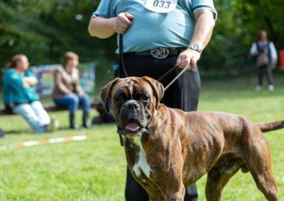 SwissBoxer-DogShow-2019-©BoxerClubGVA-(262)