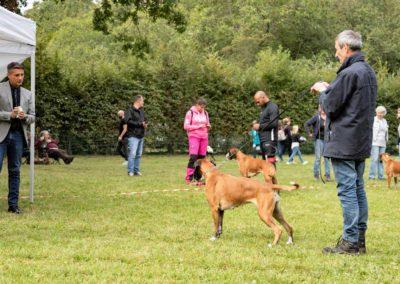 SwissBoxer-DogShow-2019-©BoxerClubGVA-(264)