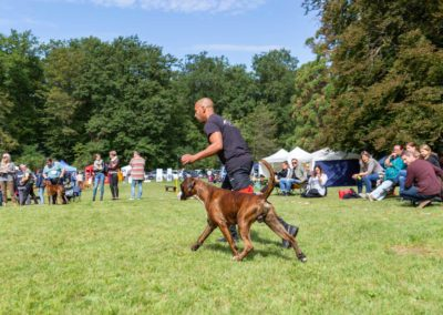 SwissBoxer-DogShow-2019-©BoxerClubGVA-(266)