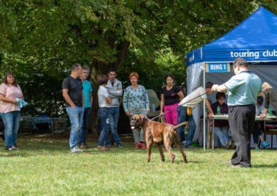 SwissBoxer-DogShow-2019-©BoxerClubGVA-(268)