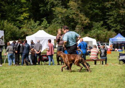 SwissBoxer-DogShow-2019-©BoxerClubGVA-(270)
