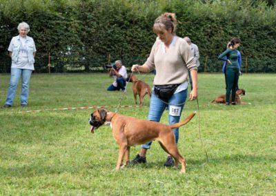 SwissBoxer-DogShow-2019-©BoxerClubGVA-(273)