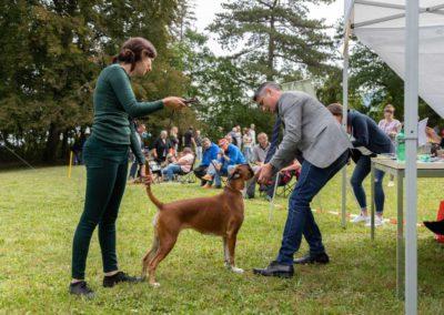 SwissBoxer-DogShow-2019-©BoxerClubGVA-(274)