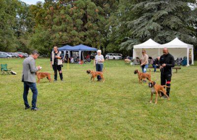 SwissBoxer-DogShow-2019-©BoxerClubGVA-(276)