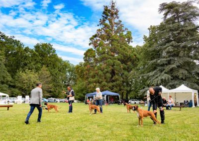 SwissBoxer-DogShow-2019-©BoxerClubGVA-(277)