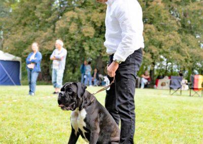 SwissBoxer-DogShow-2019-©BoxerClubGVA-(278)