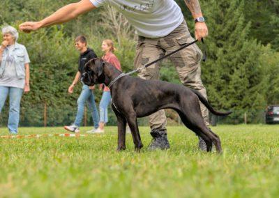 SwissBoxer-DogShow-2019-©BoxerClubGVA-(282)