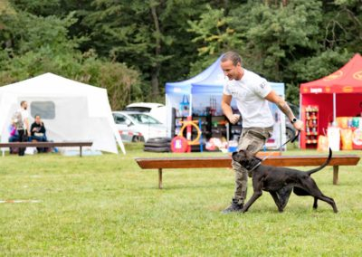 SwissBoxer-DogShow-2019-©BoxerClubGVA-(284)