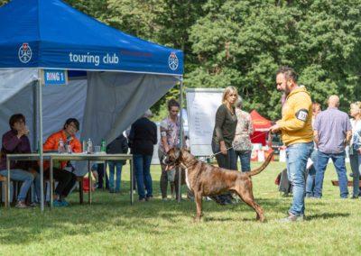 SwissBoxer-DogShow-2019-©BoxerClubGVA-(285)