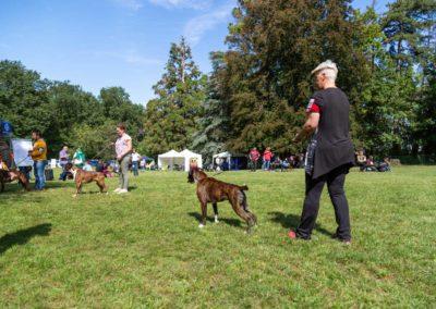SwissBoxer-DogShow-2019-©BoxerClubGVA-(288)