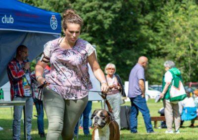 SwissBoxer-DogShow-2019-©BoxerClubGVA-(289)